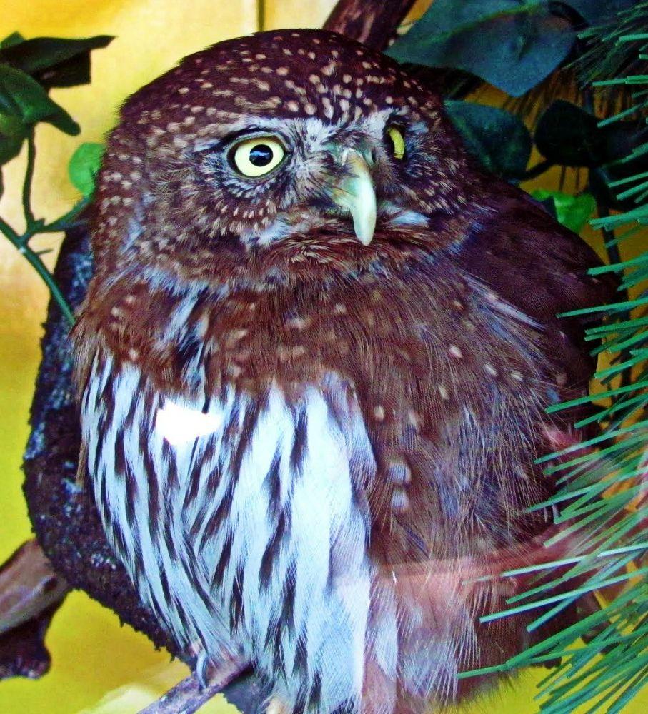 Owl by Michelle Farmer