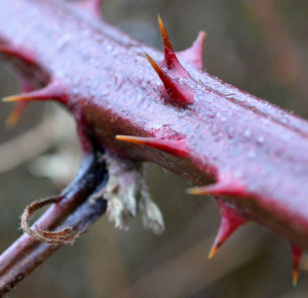 Thorns by Michelle Farmer