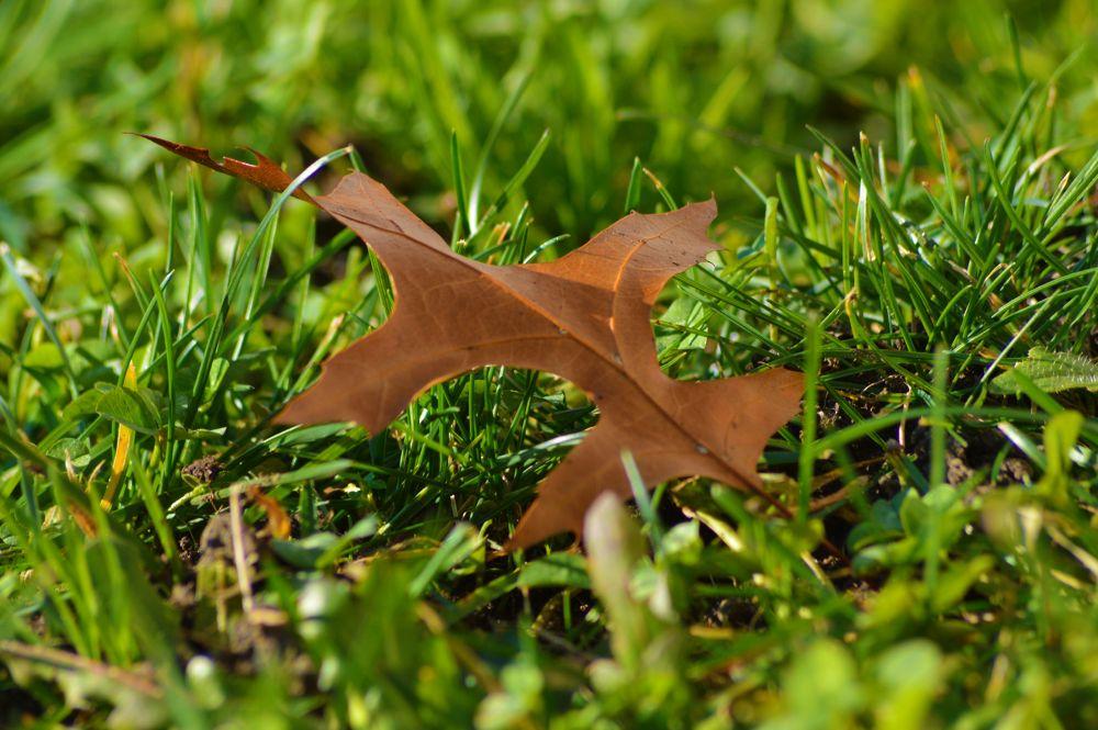Leaf by Michelle Farmer