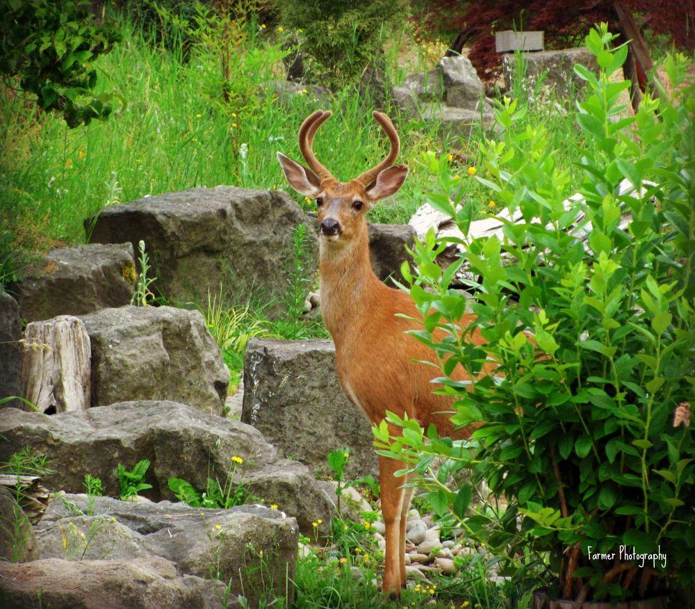 Deer by Michelle Farmer
