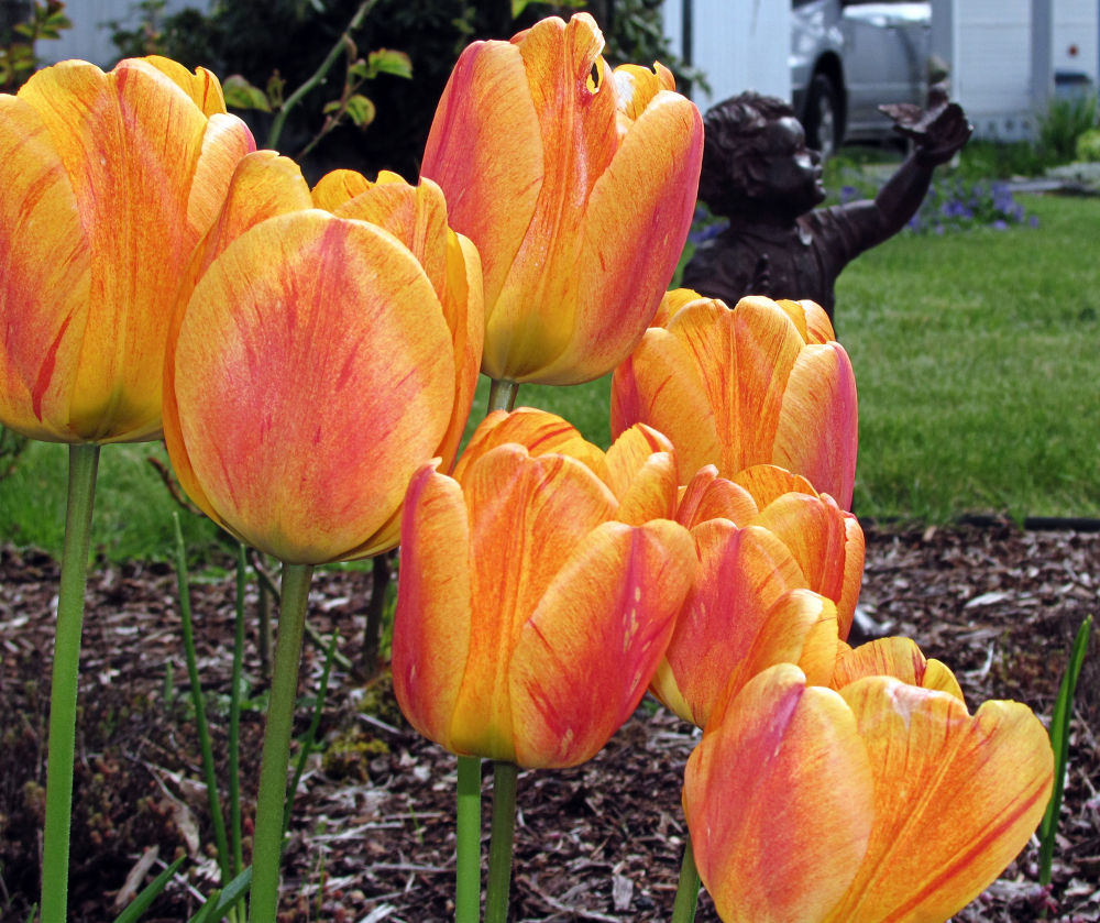 Tulips by Michelle Farmer