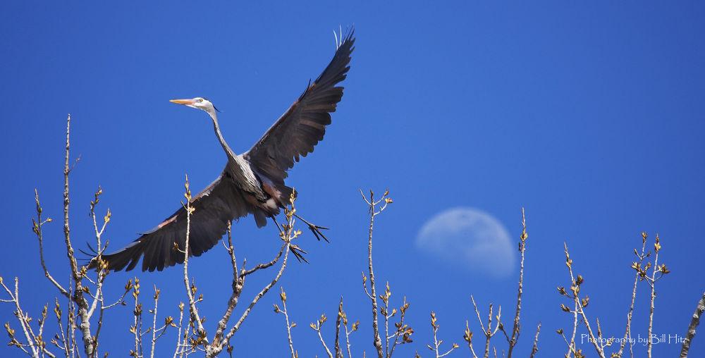 Big Bird! by Bill Hitz