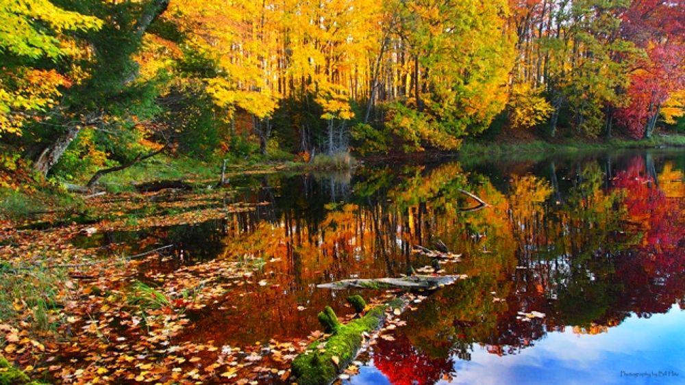 Northwoods by Bill Hitz