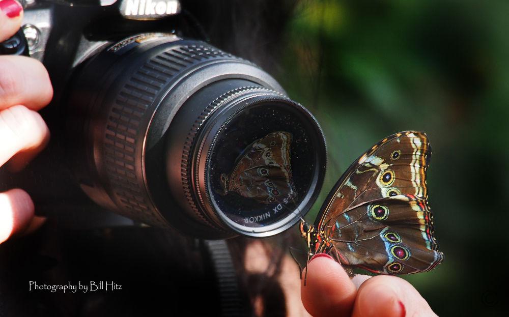 The Camera by Bill Hitz
