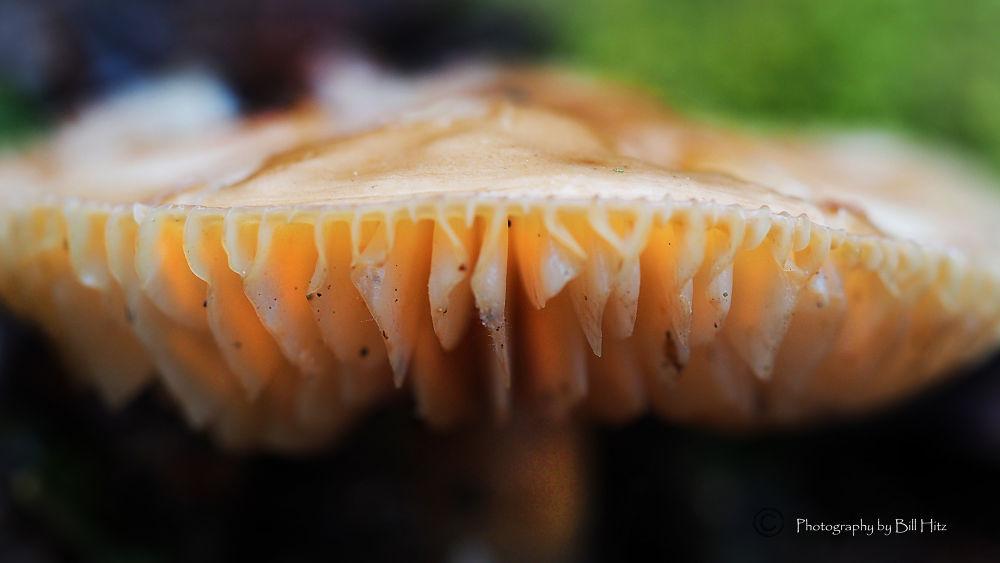Mushroom4 by Bill Hitz