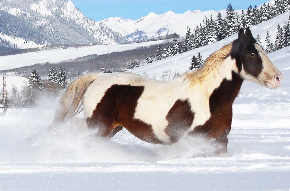 Rocky Mountain Freedom by Bill Hitz