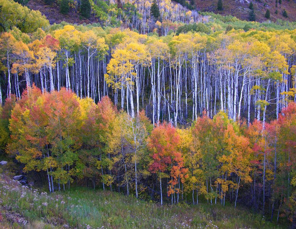 Fall Colors by Bill Hitz
