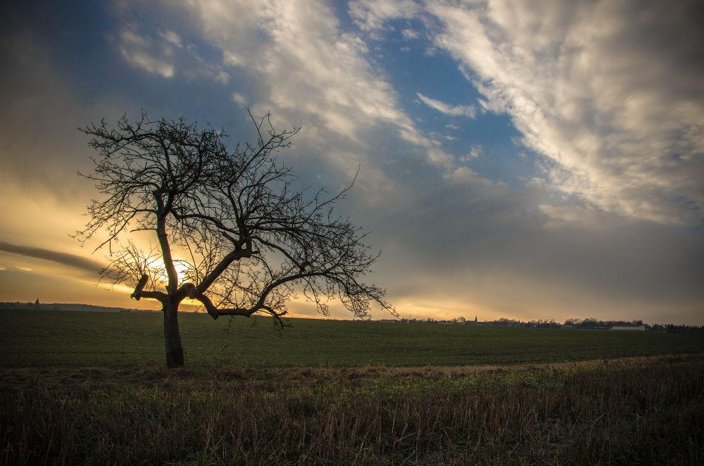 tree by Alexandra Bode