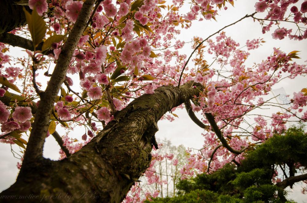 spring by Alexandra Bode