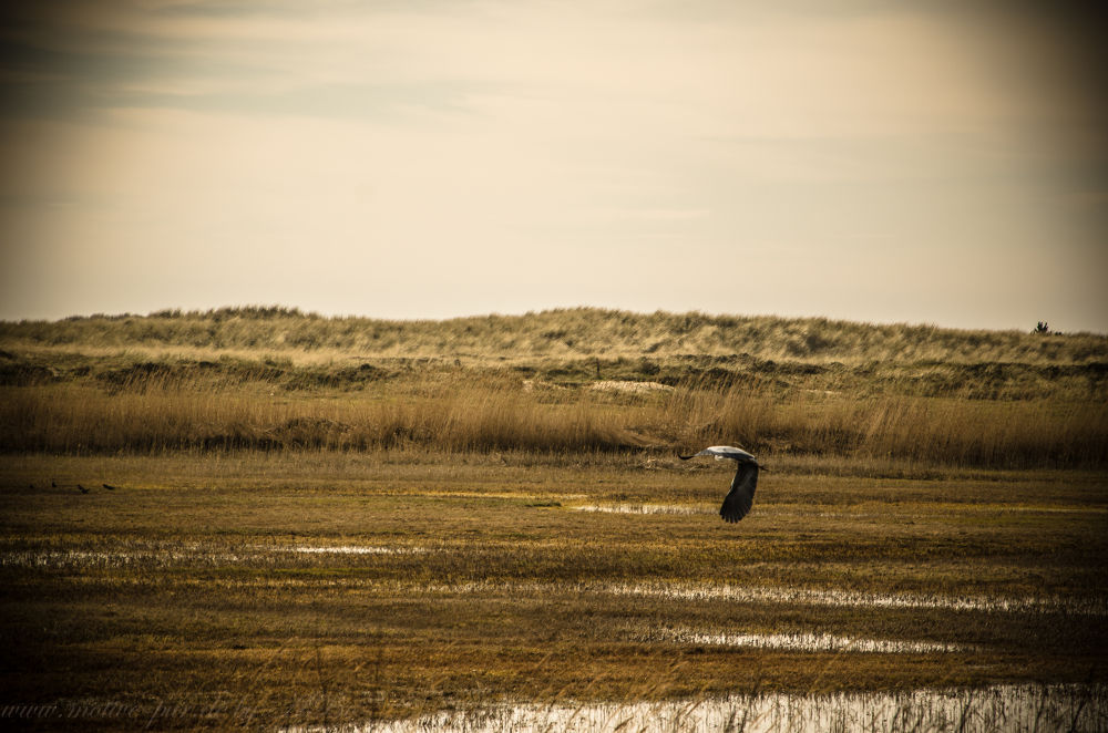 Friesland by Alexandra Bode