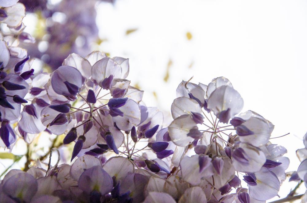 purple by Alexandra Bode