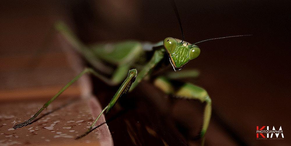 Insect by Kareem Jebrane