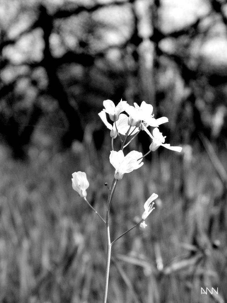 Flower by Anton Nistor Nicolae