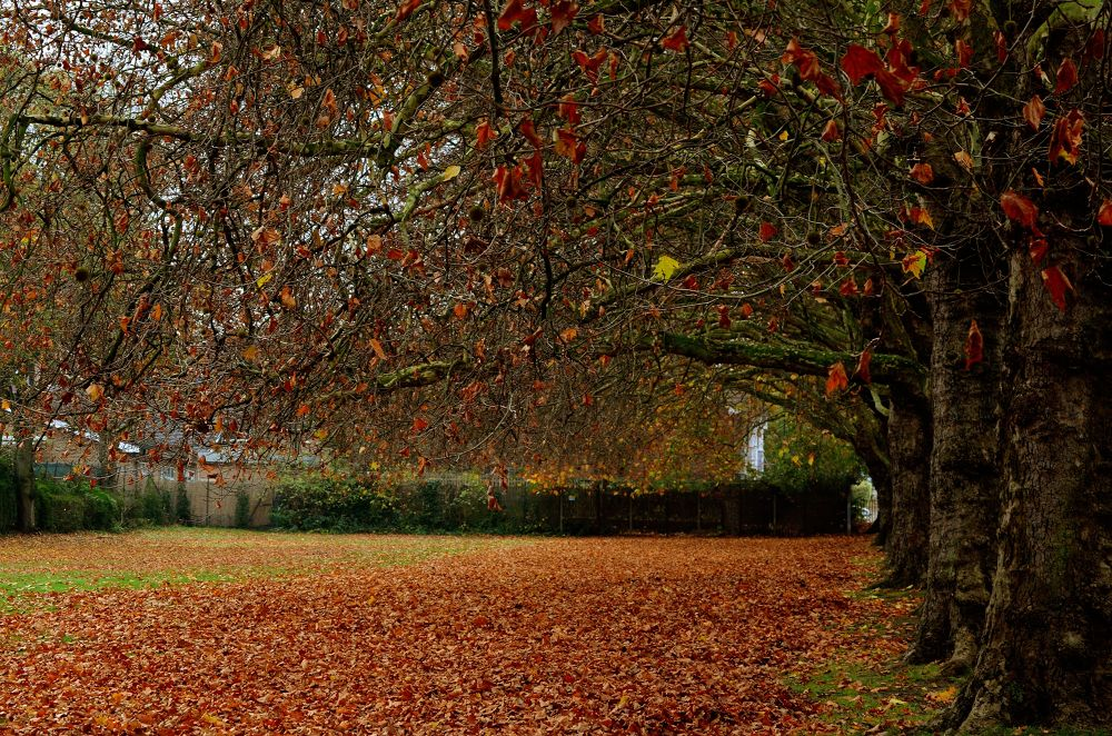 Autumn by Samer Aldardari