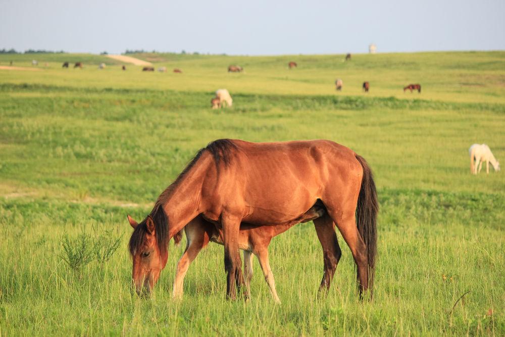 Wild Horses by Christal Gavin