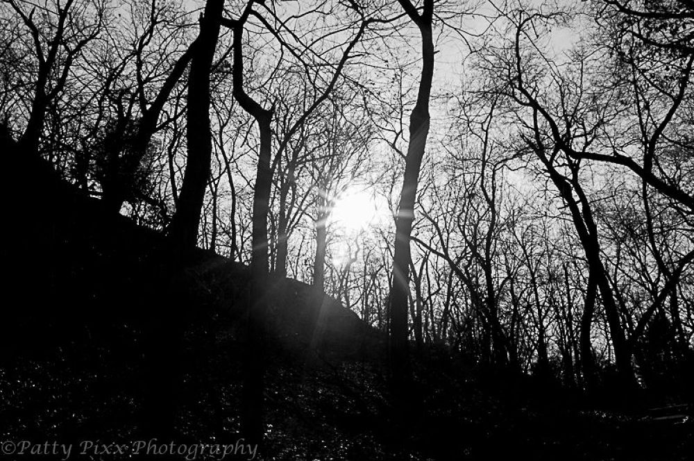Starved Rock - Light by pattypixxphotography