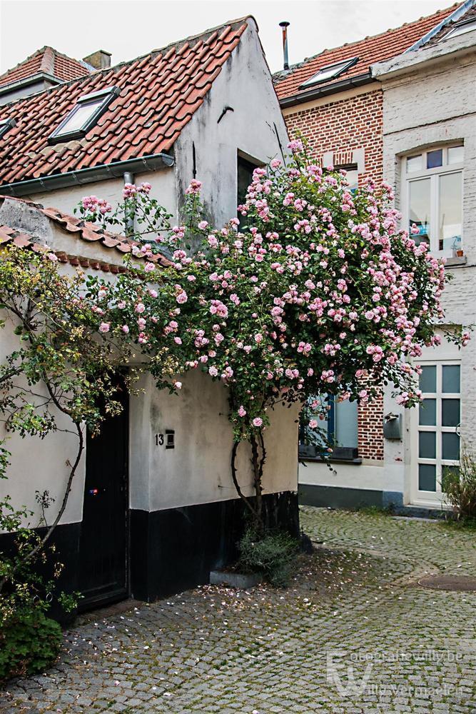 Belgium, Mechelen unexpected by fotografiewilly