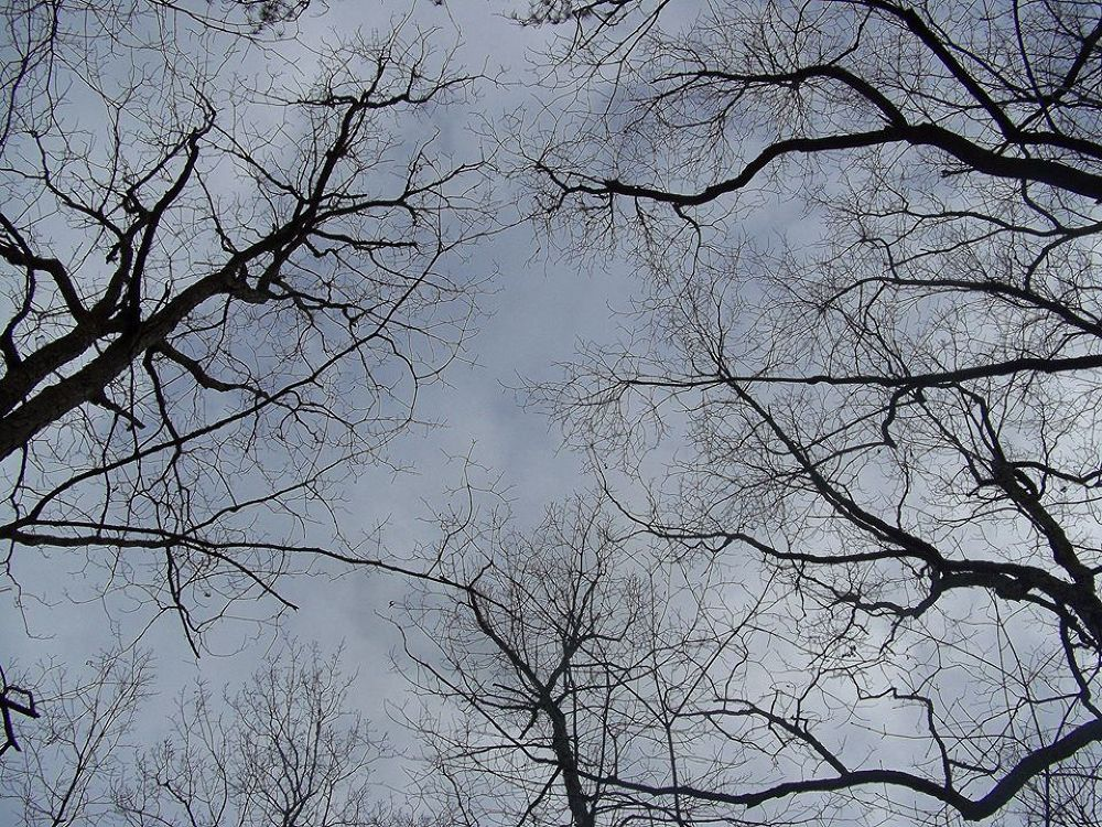 Fairystone Hunting; Looking up.  by CheyenneD