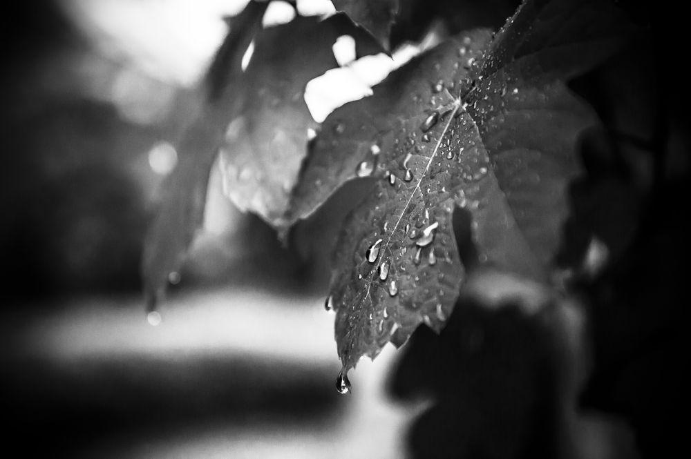 Grey leaves by Chas Krijnen