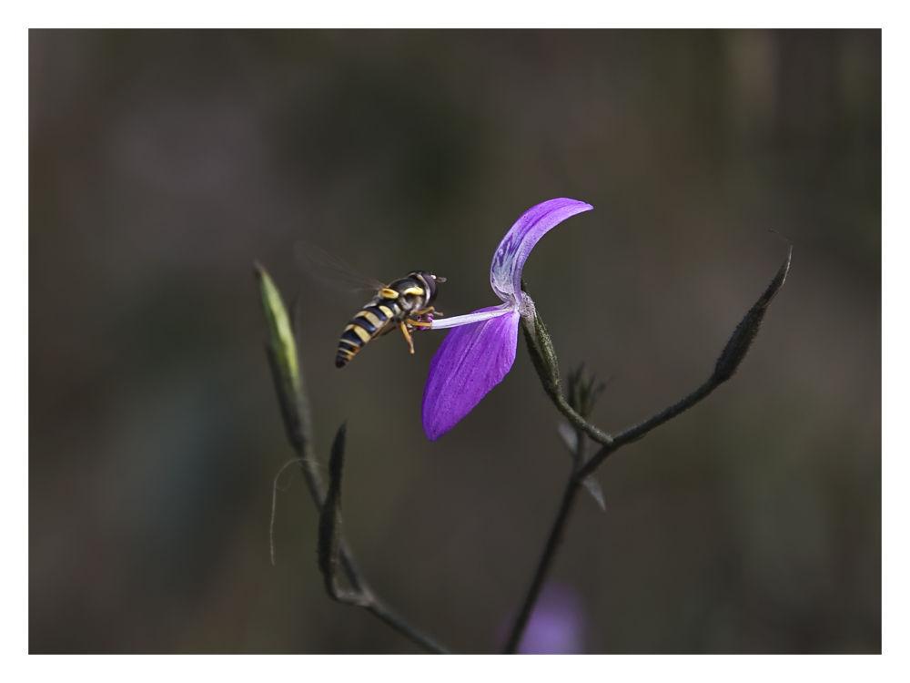 AKP_0669 by Harshad Sanghavi