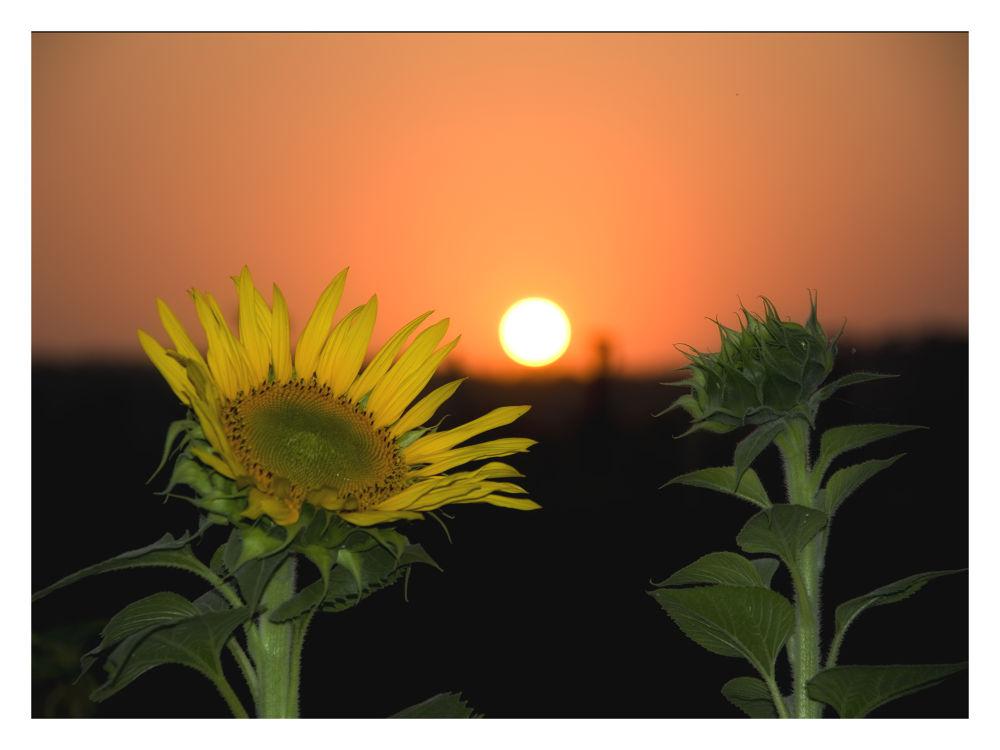 """SUN"" by Harshad Sanghavi"