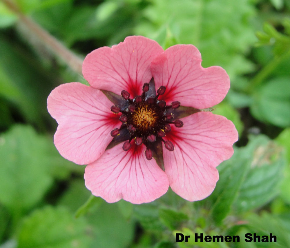 Beautiful Flower. by Hemen
