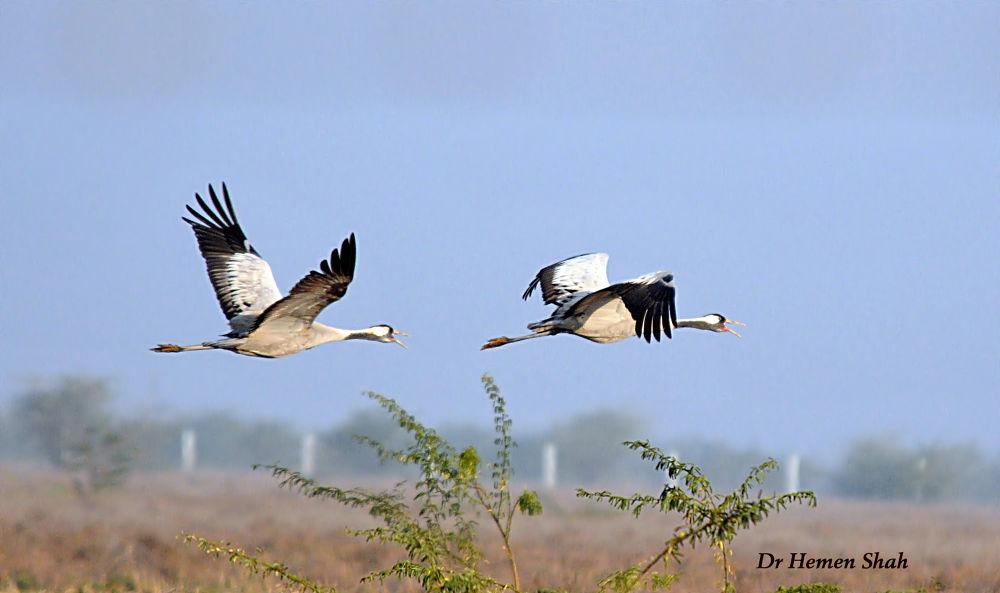 Cranes. by Hemen