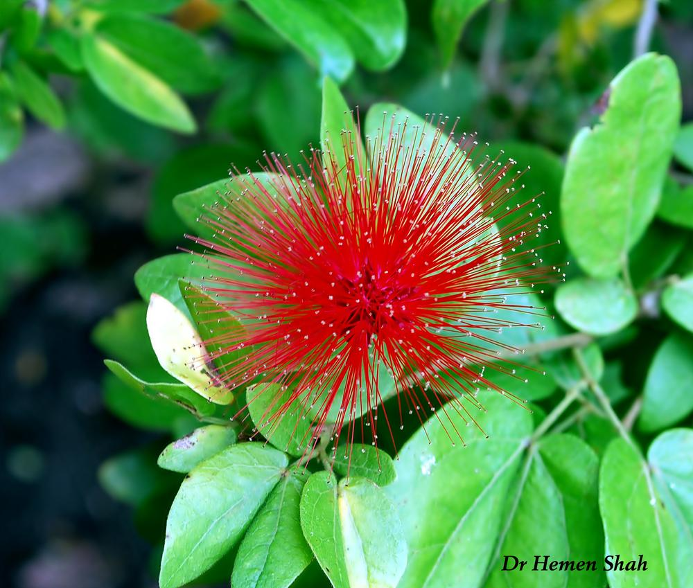 BEAUTIFUL FLOWER by Hemen
