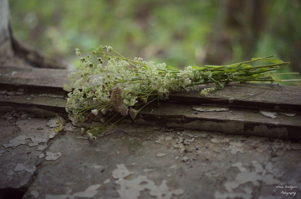 photo by Irina_Vorobyeva