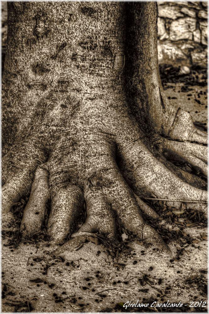 radice sepia by GiroPhoto - Girolamo Cavalcante