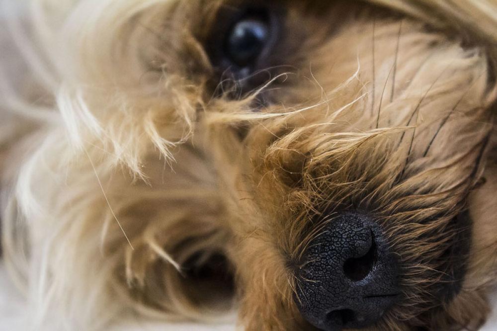 Dog.jpg by Luca Belogi