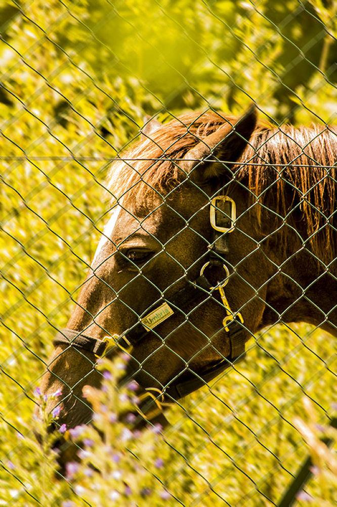 Horse_001 by Luca Belogi