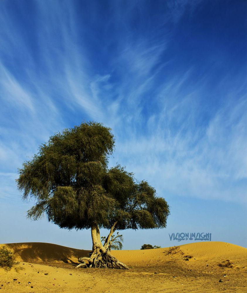 wood in desert by Prajeshvenugopal