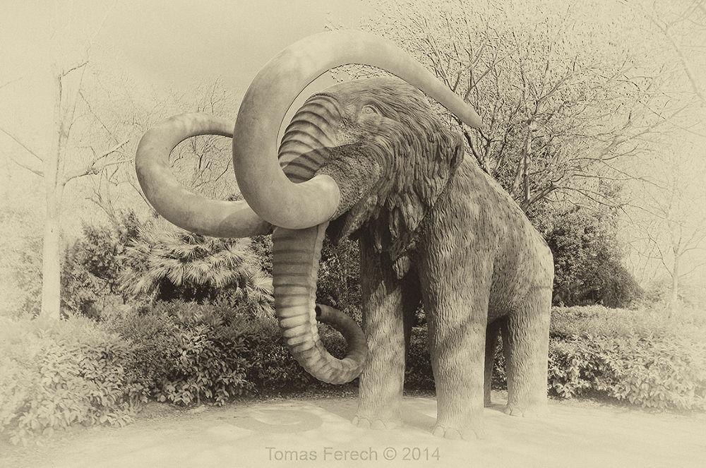 Mamut in Parc de la Ciutadella by Tomas Ferech