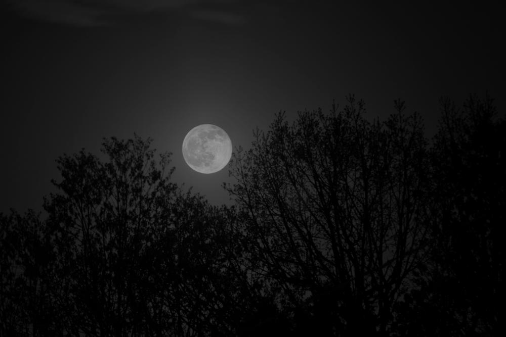 Photo in Nature #moon #night