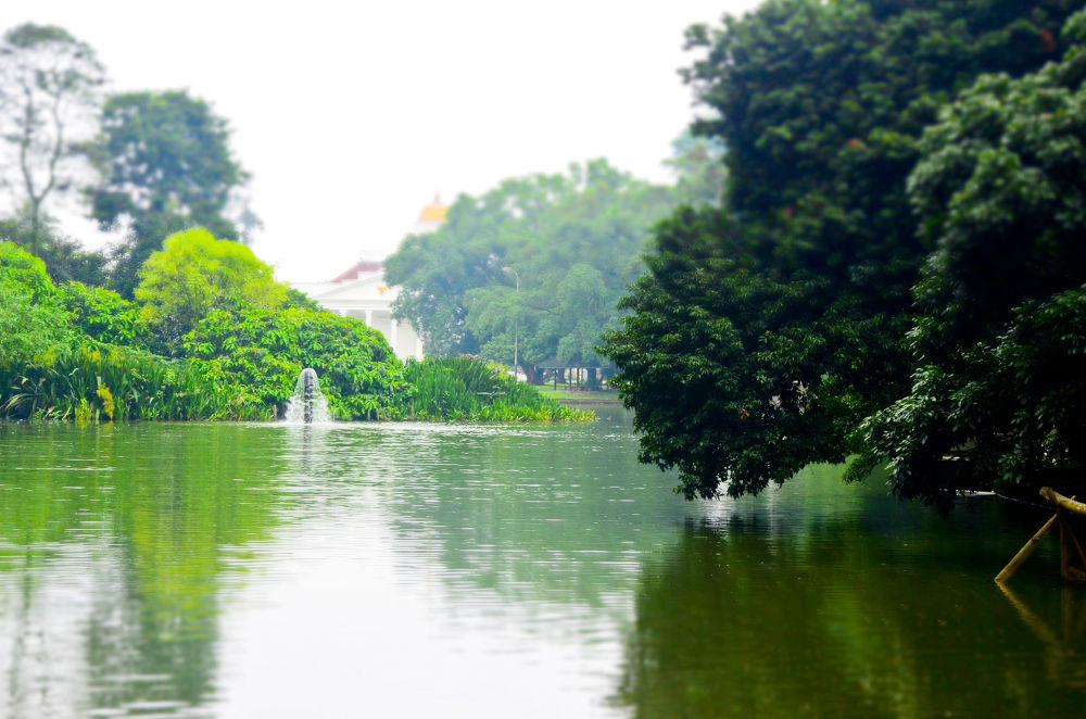 Bogor Botanical Garden, Beautiful Landscape  by Galuh Irawan