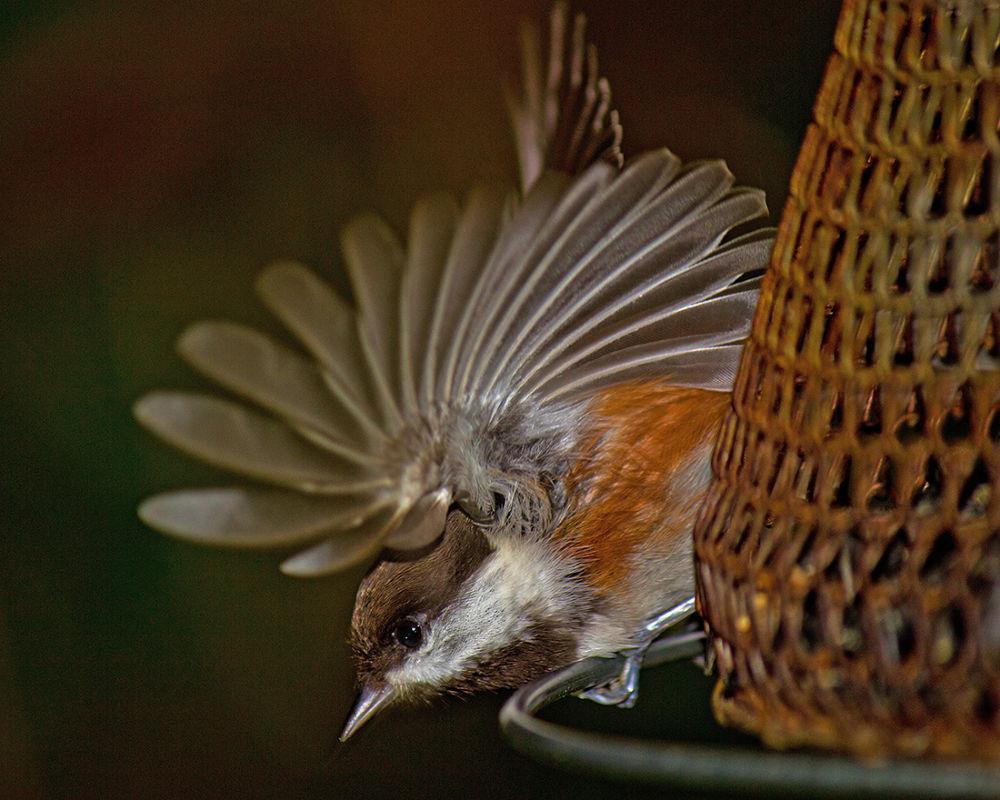 Taking Flight by Randy Hall