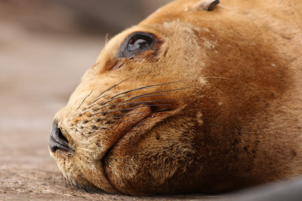 Photo in Animal #seal #animal #sea