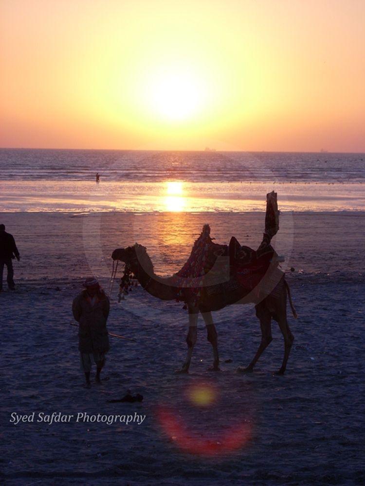 Sunset Camel Comp by syedsafdar