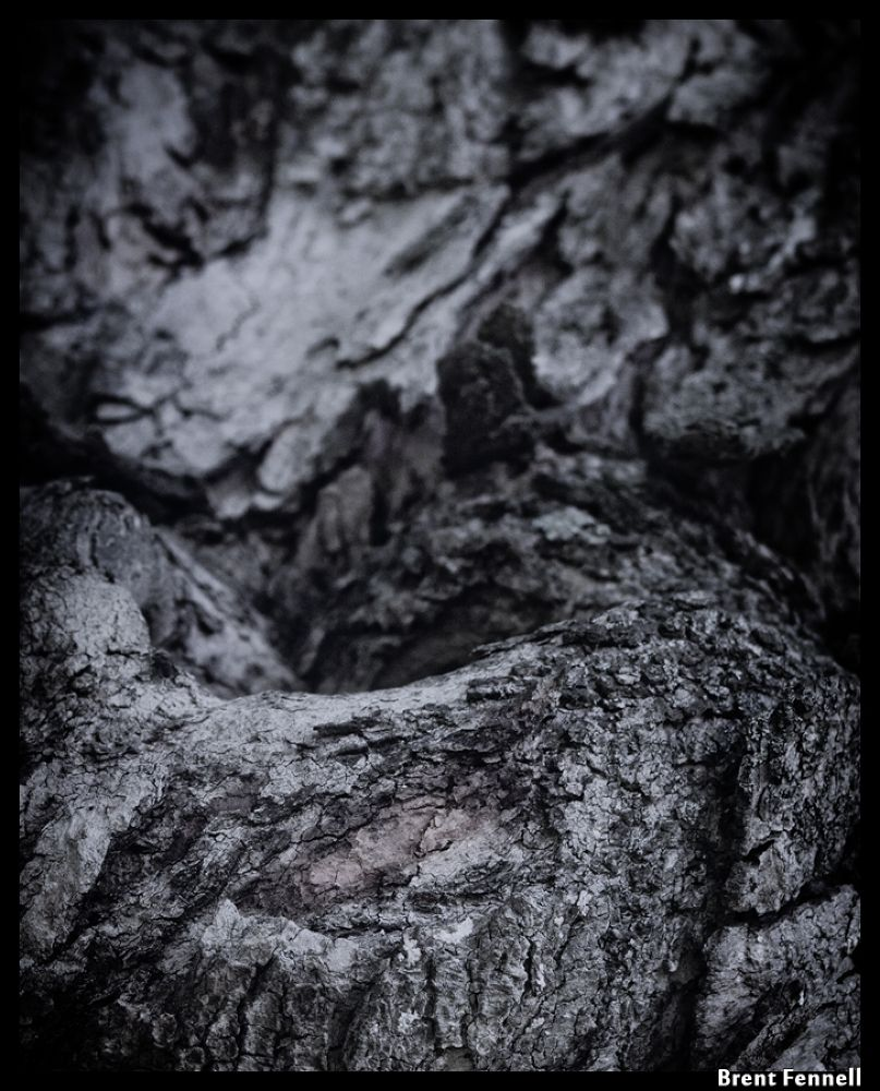 Tree Bark hidden images by Brent Fennell