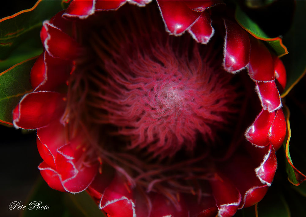 Flower by petewong