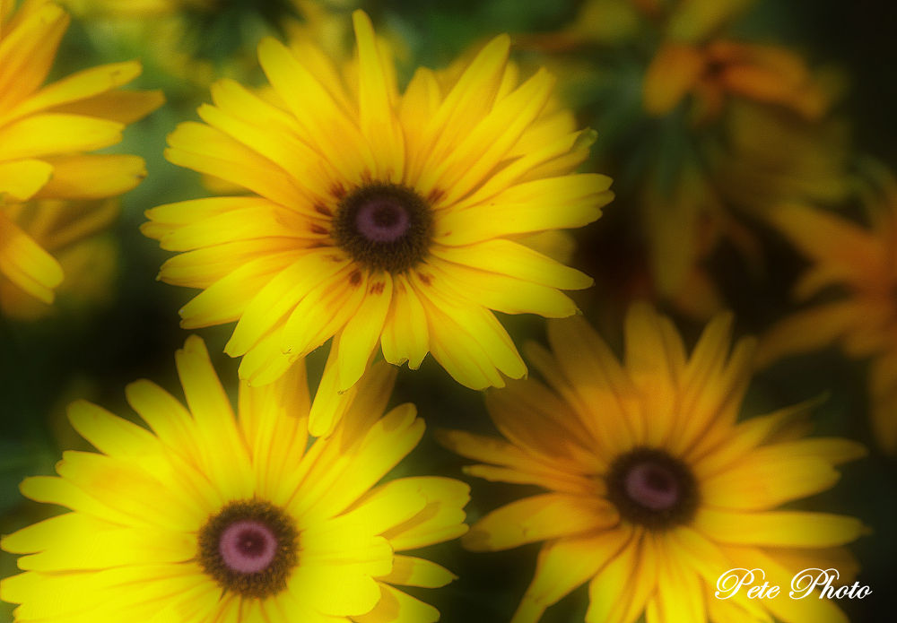 Flowers by petewong