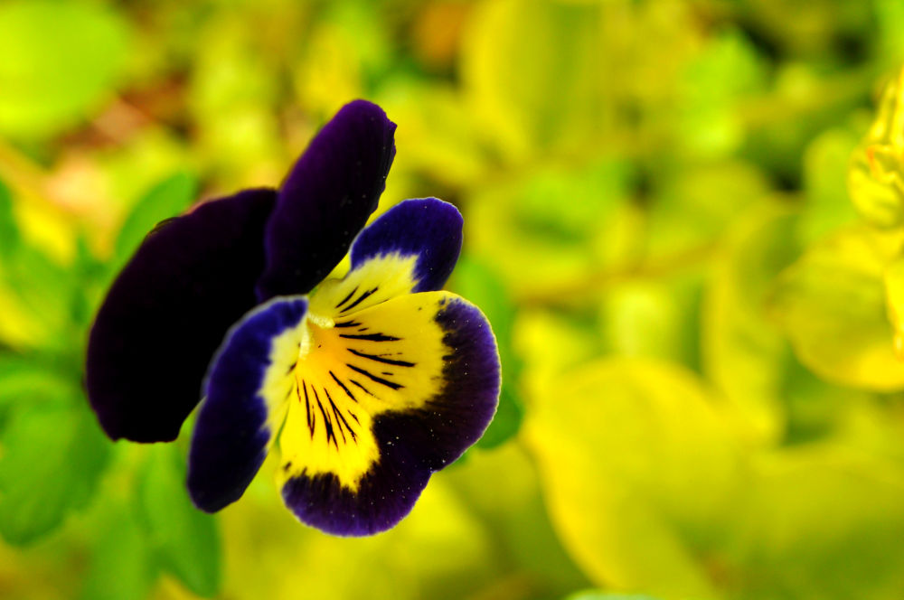 Blue in Yellow by Jacob Smith
