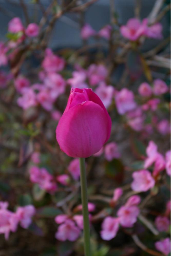 Pretty in pink by ROCKGOD