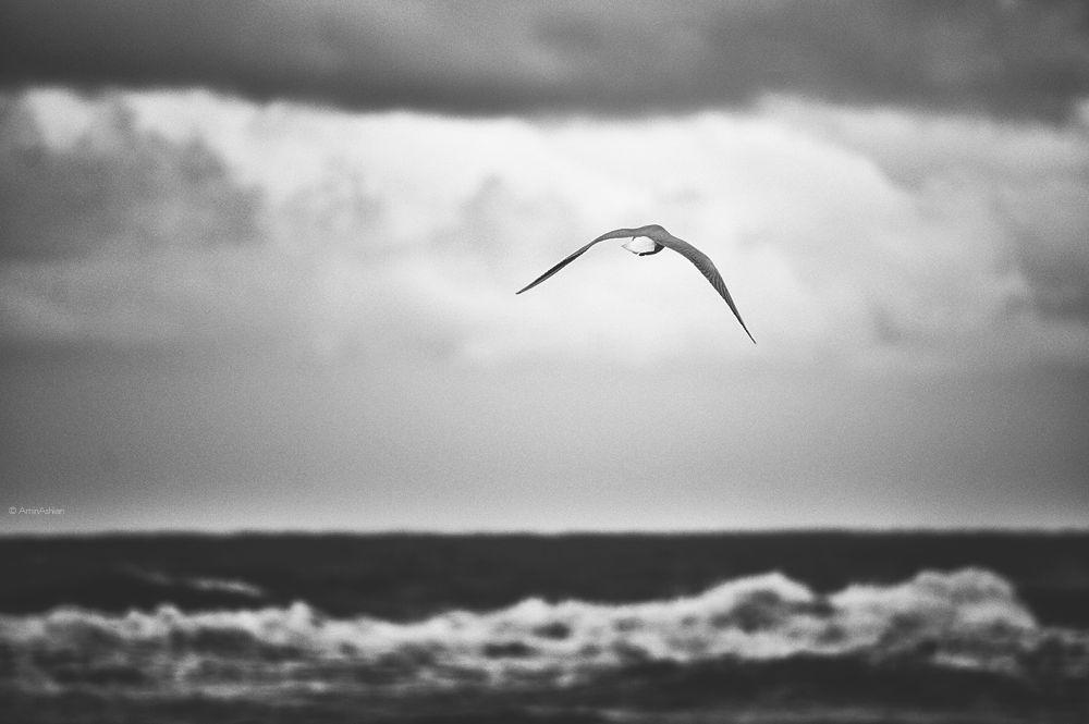 flying dream by AminAshkan