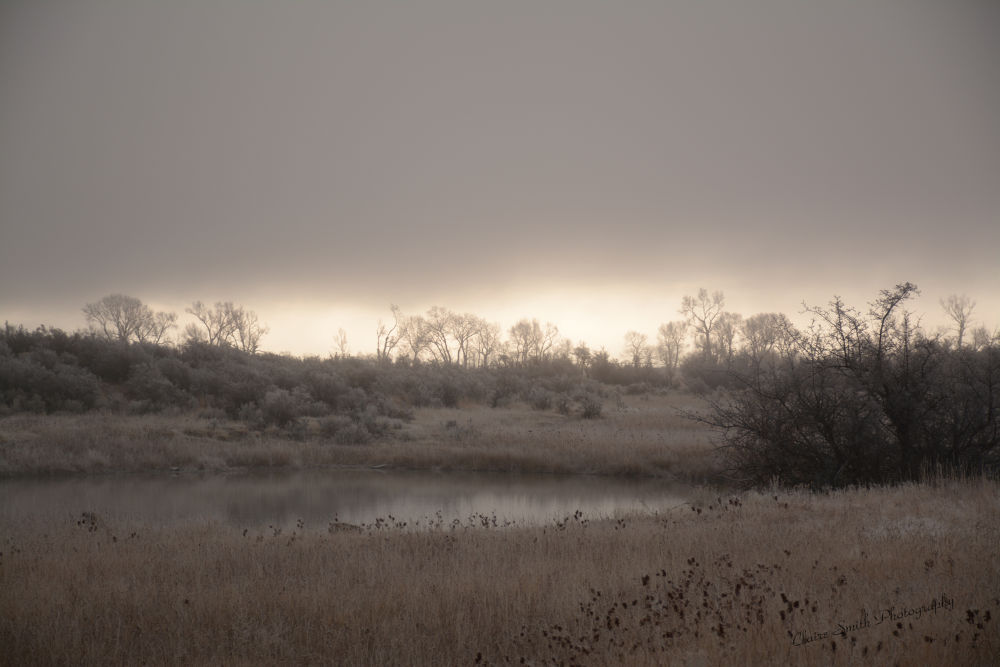 Misty Morning Shadows by Claire Smith