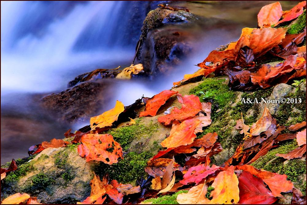 Autumn hug by Akbar Nouri