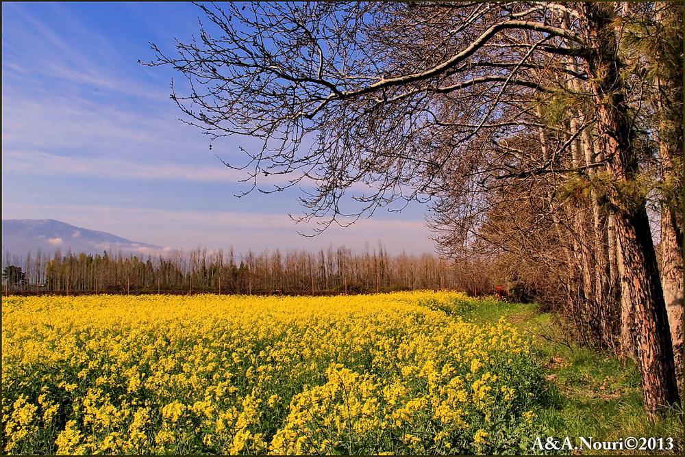 yellow fantasy by Akbar Nouri