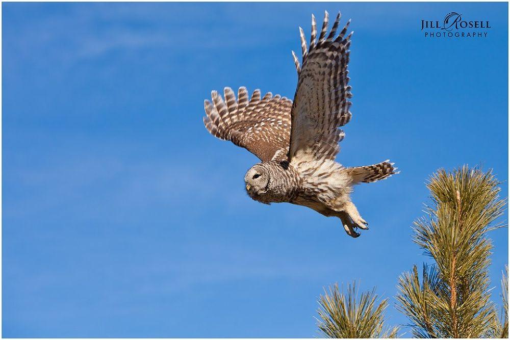 in flight by Jill Rosell