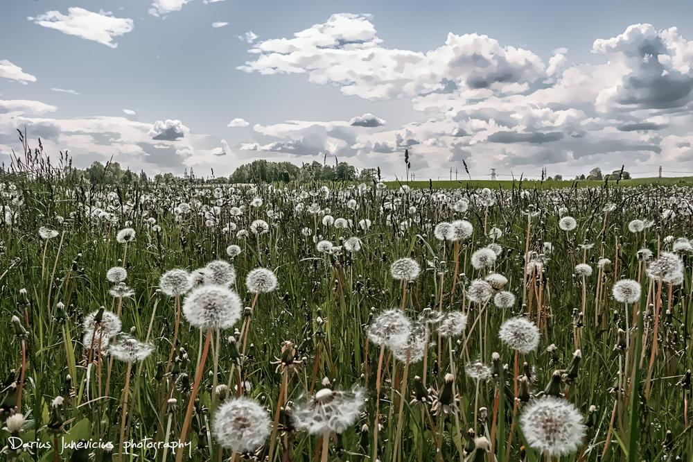 Spring by Darius Junevicius